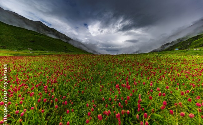 Mandini Trek , alternate option to Valley of Flowers
