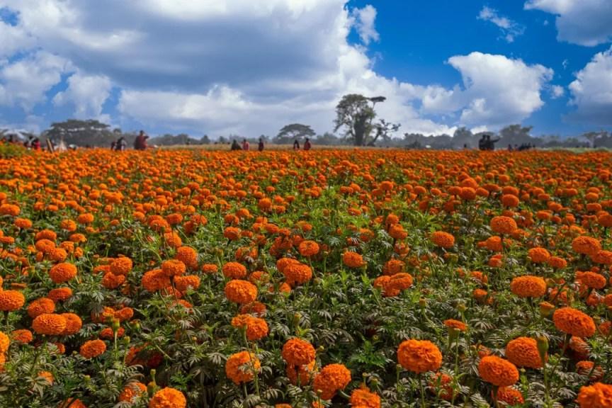Khirai flower garden of Bengal