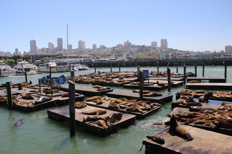 San Francisco Fisherman's Wharf