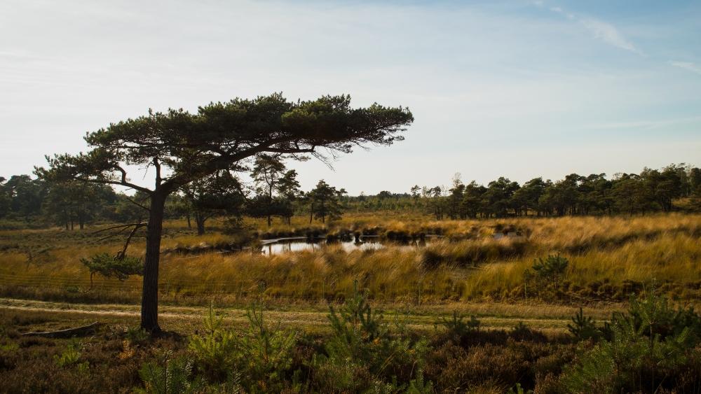 De Kalmthoutse Heide: genieten van een herfstwandeling