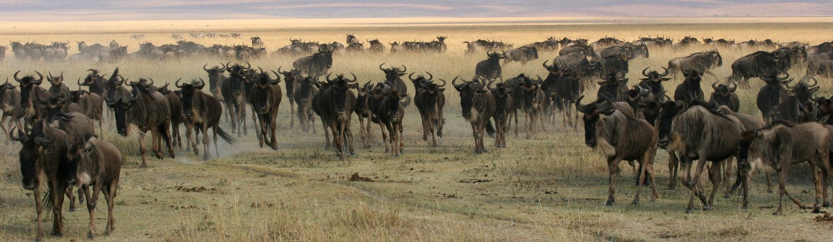 3 Days Safari Ngorongoro and Serengeti Tour in Tanzania