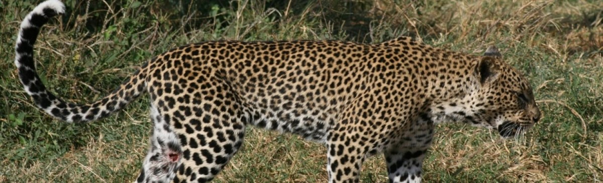 4 Days Safari Ngorongoro and Serengeti Tour in Tanzania