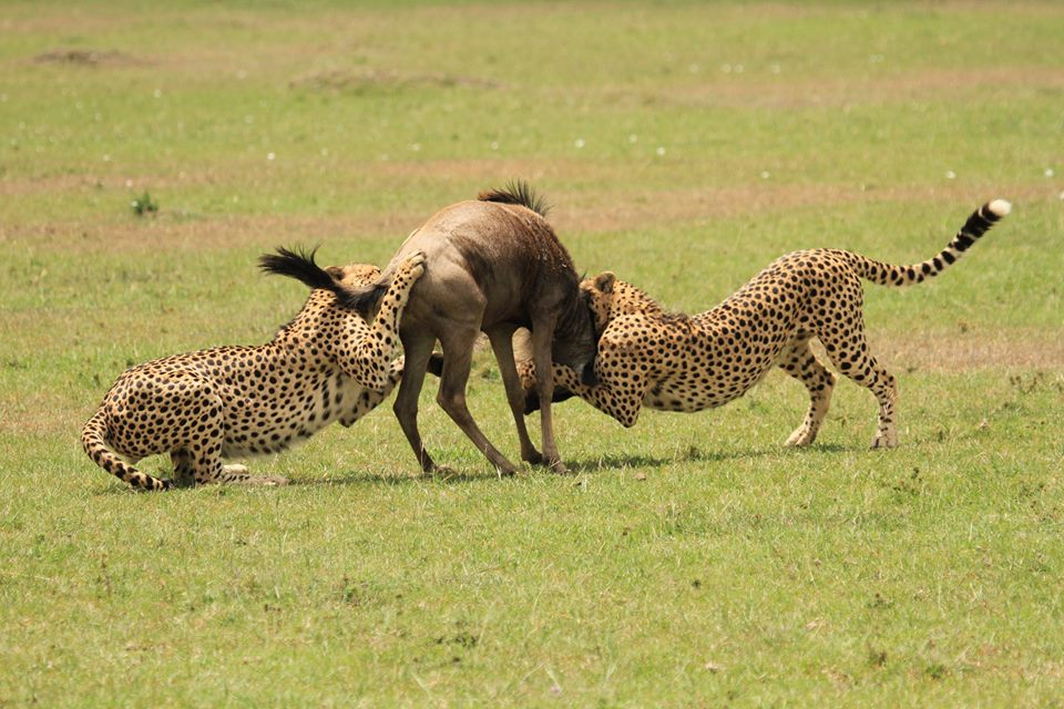 4 Days 3 Days- Masai Mara and Lake Nakuru