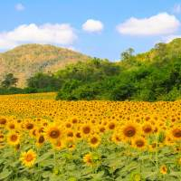 In pictures: The idyllic town of Khao Yai; TravelELOG