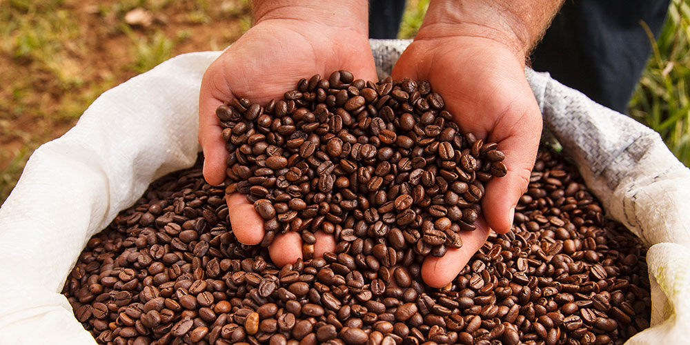 Image Result For Austina Coffee