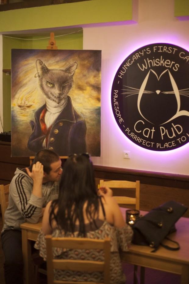 Cats Pub009