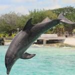 フェロー諸島も行っているイルカの追い込み漁。「和歌山県の見解が強気だな」