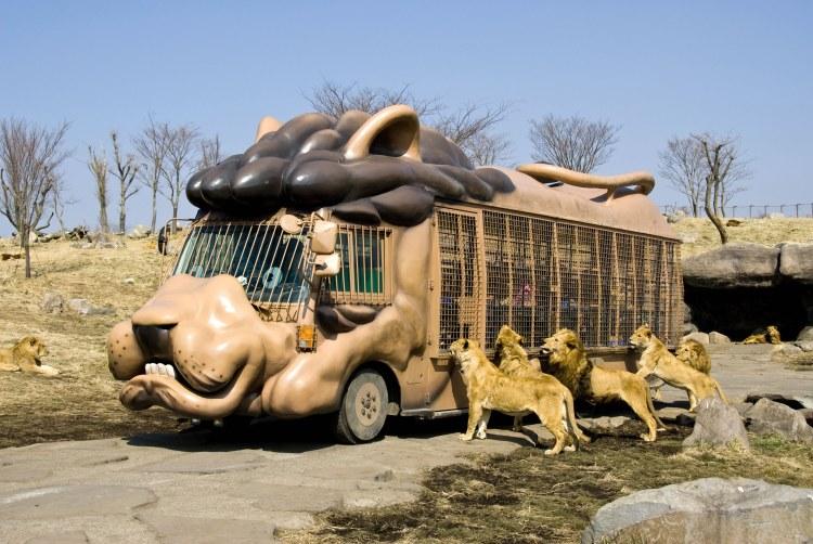 全国の動物園ランキングをご紹介!「これを見ずに動物園には行けない!」