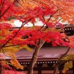 鎌倉の紅葉が見頃な時期は毎年11月中旬以降!おすすめスポットもご紹介!