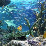 平日でも混雑!サンシャイン水族館の混雑を避ける時間帯・方法をご紹介。