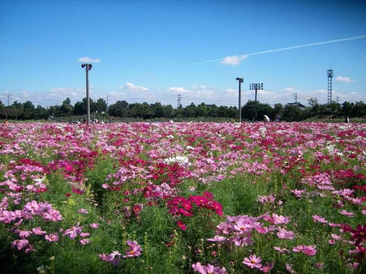 三重県の観光ランキング!秋にオススメの場所をご紹介。