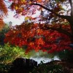 井の頭公園の紅葉見頃時期は11月下旬から!ライトアップはなし…。