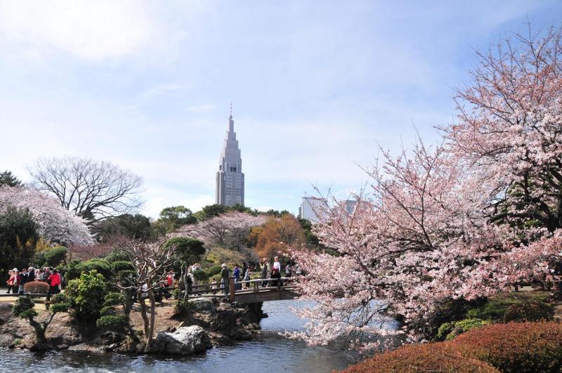 東京でお花見をしたい!穴場スポットはどこ?