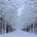 冬の旅行デート♡カップルにオススメの国内スポットはこちら。