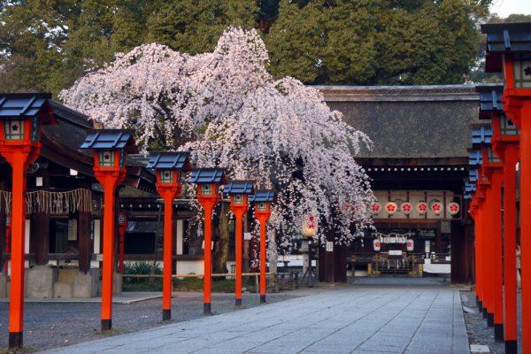 平野神社は絵馬もお守りも桜!「授かる守」も気になる!