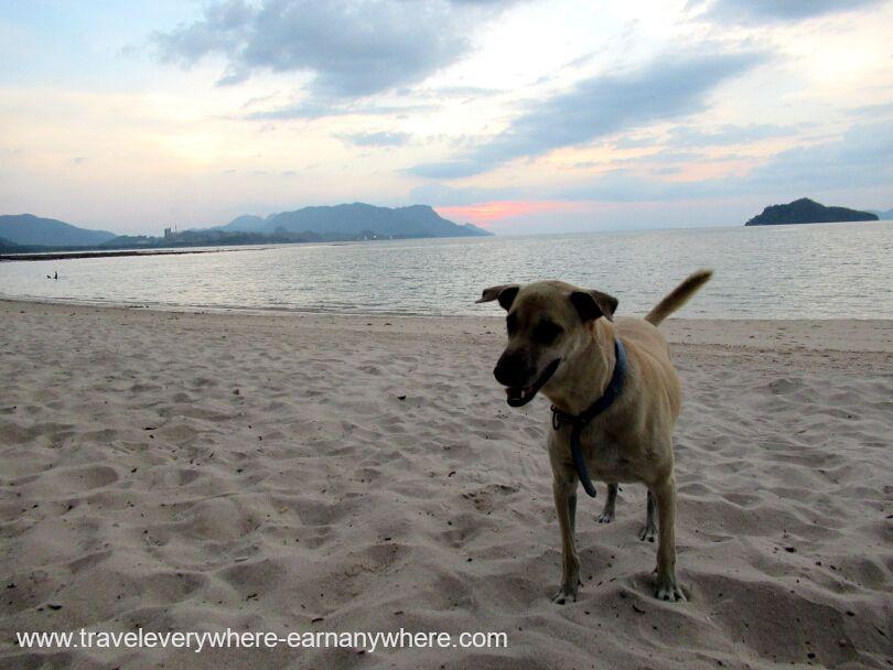 Dog on beach in Langkawi