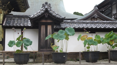 Kencho-ji (36)