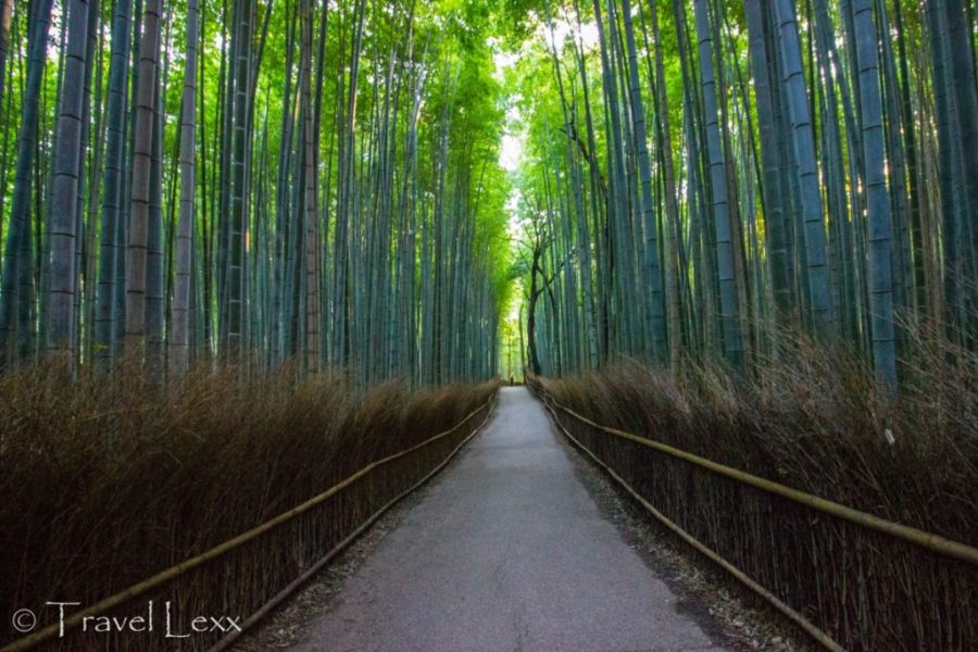 Arashiyama Bamboo Forest, Kyoto - 20 Reasons Why You Shouldn't Travel To Japan
