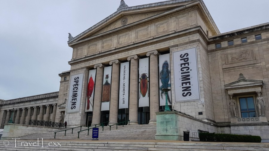 Field Museum - Top Things To Do In Chicago