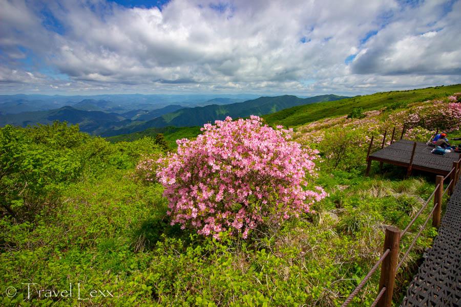 Wildflowers in bloom in Sobaeksan National Park