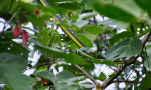 Tree Snake!