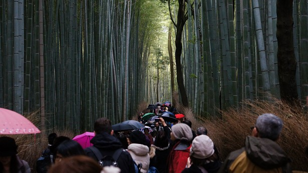 what to do kyoto (3)