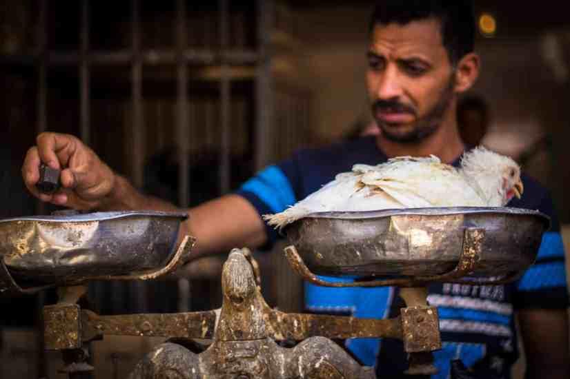 The chicken man of Giza.