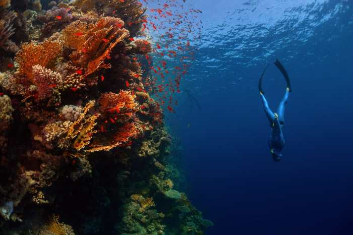 Freediving is described as a form of underwater meditation