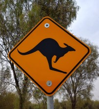 Kangaroo road sign, Australia