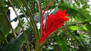 Parque das Aves, Foz do Iguacu, Brazil
