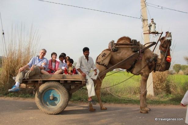 camel cart village tour