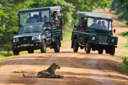 leopard-sri