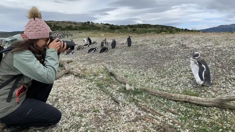 Voce del verbo pinguinare