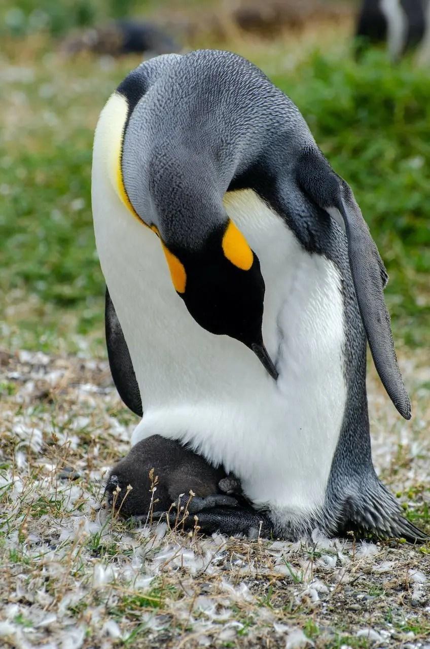 Pinguini Ushuaia