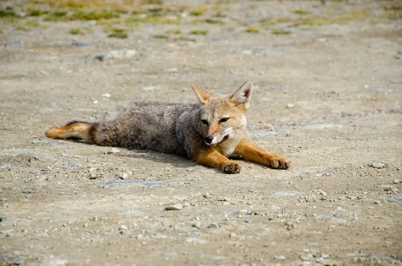 animali Patagonia