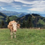 montagna svizzera