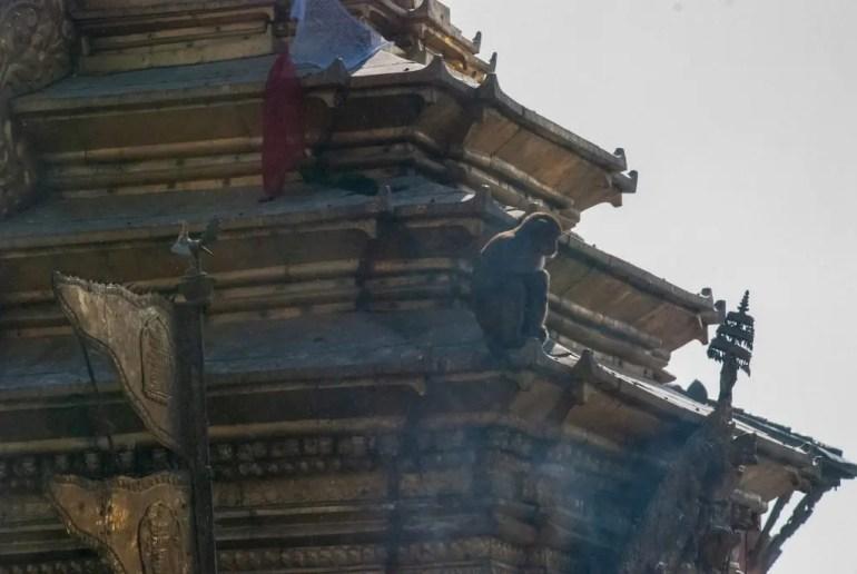 tempio delle scimmie kathmandu