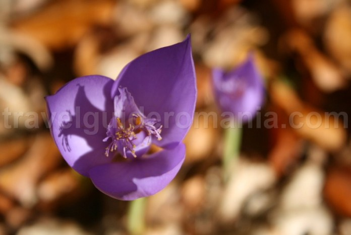 Flora of Padurea Craiului mountains
