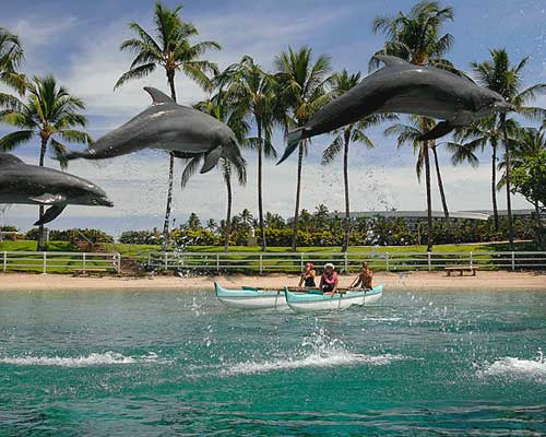 Dolphin Quest At Hilton Waikoloa Village