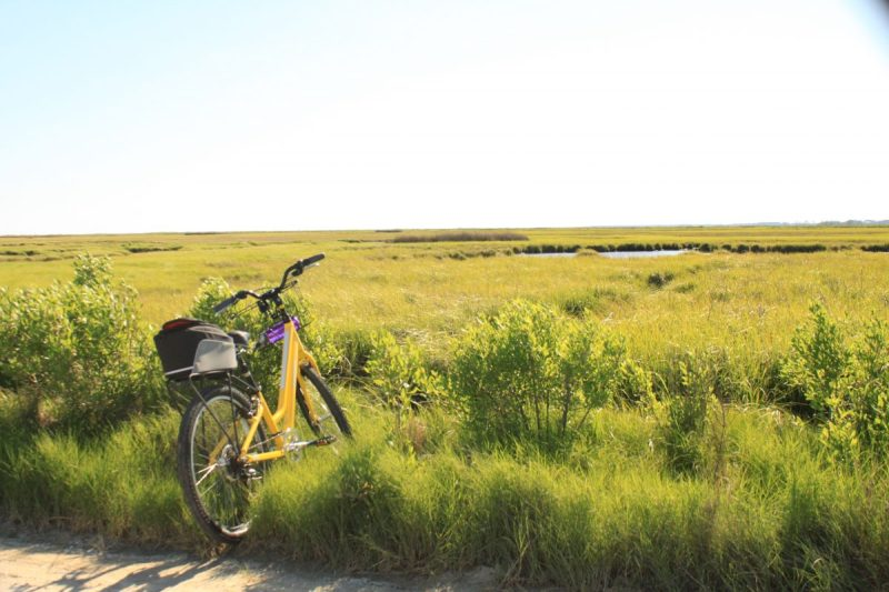 Trek Shift 1 - Rumbly Point Marsh MD