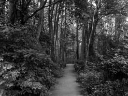 Pocomoke Forest