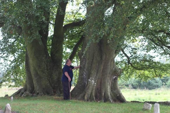 Beech trees at Monaincha, County Tipperary, Ireland