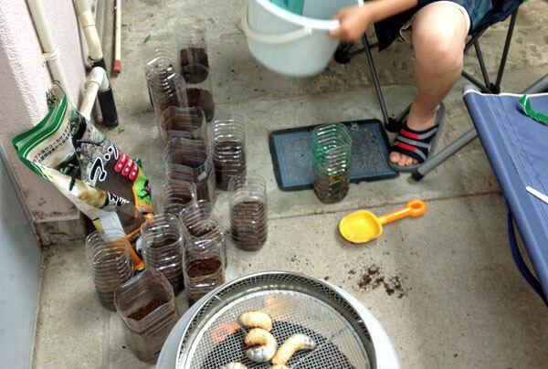 かぶとむし ペットボトル飼育