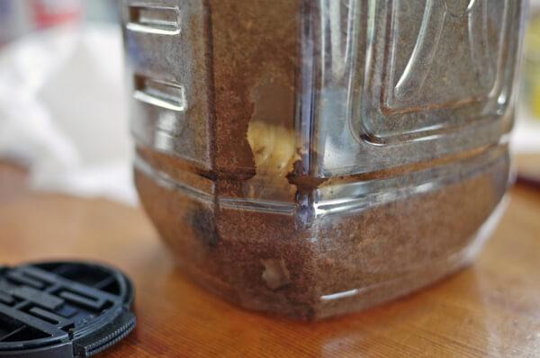 カブトムシの幼虫 前蛹 蛹化 蛹になる直前