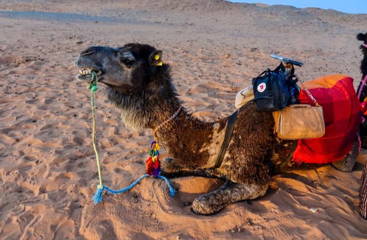 Sahara D Camel