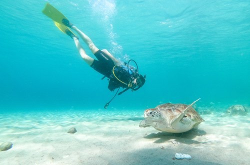 Top 10 Things to do in Curaçao - Playa Grandi Diving