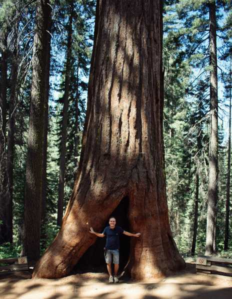 what to see yosemite national giant sequoias