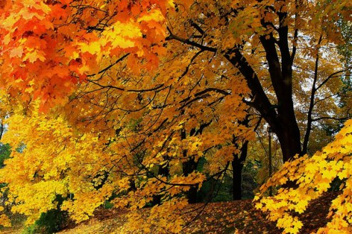 fall-time