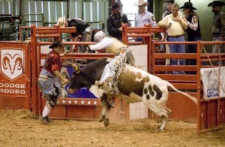 bull-and-bullfighter