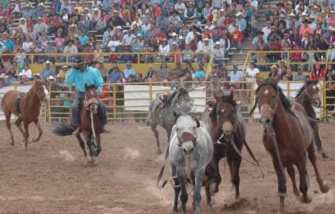 wild-horse-race1